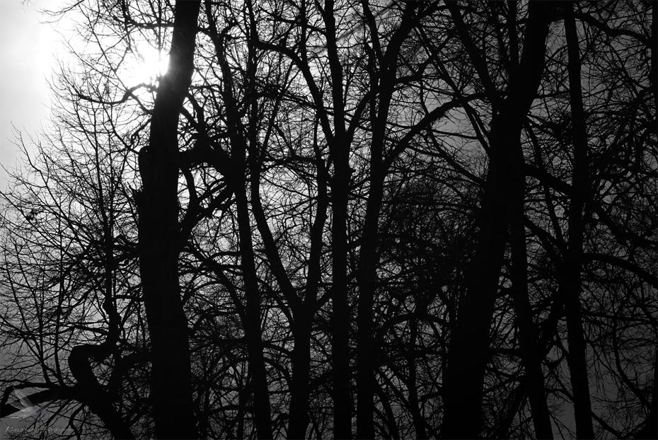 Один вечер в парке