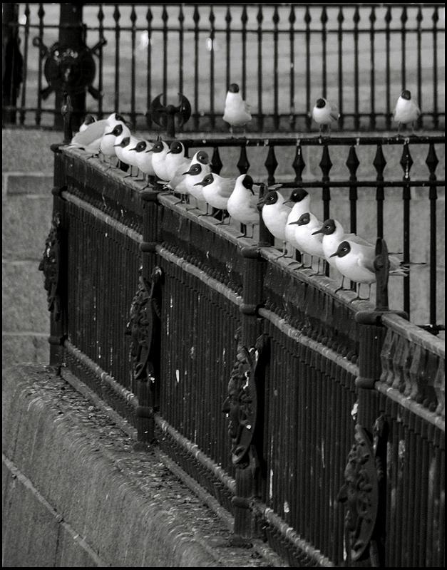 ритмическая картинка с чайками