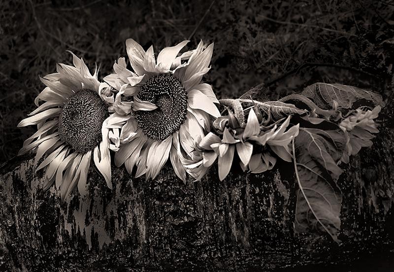 Недолог век цветенья