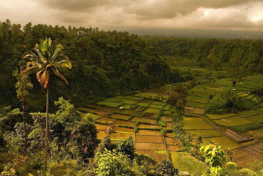 Рисовая долина