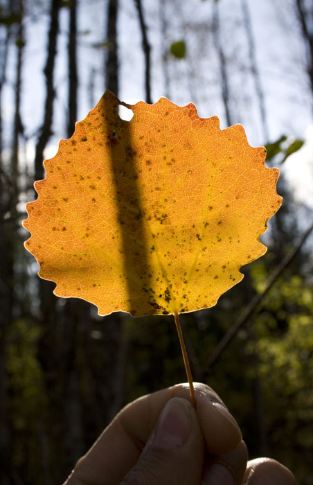 Осенний силуэт