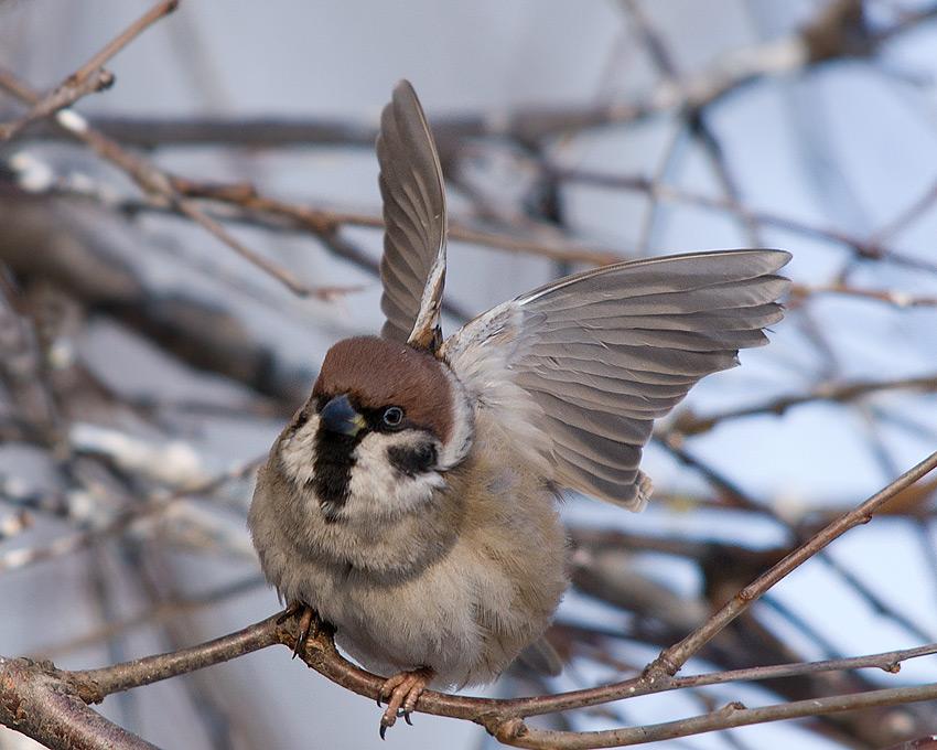 жизнь птичья